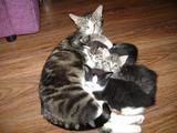 Котята ищут добрых хозяев