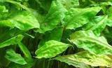 Аквариумные растения, улитки
